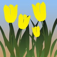 Free Tulip Garden Royalty Free Stock Photos - 7762068