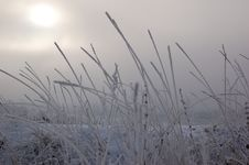 Free Grass Are Covered Hoarfrost Stock Image - 7762711