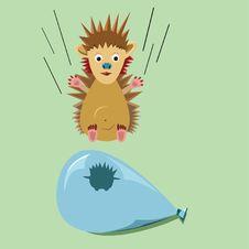 Free Hedgehog Falling Stock Photo - 7763270
