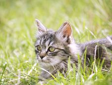 Baby Cat In The Garden Stock Photography