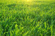 Free Green Lawn Stock Photos - 7764903