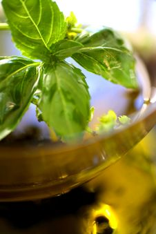 Olive Oil With Fresh Basil Stock Photography