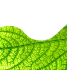 Free Green Leaf Texture Royalty Free Stock Image - 7767426