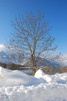 Free Winter Tree Stock Photography - 7767432