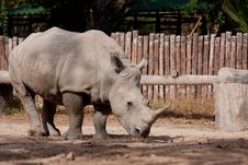Free White Rhinoceros Stock Images - 7767534