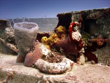 Free Colourful Corals Inhabiting A Wreck Stock Image - 7768181