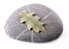 Stone With Dry Leaf Royalty Free Stock Photo