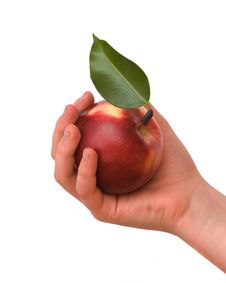 Girl S Hand With Apple Stock Photos