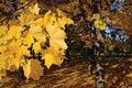 Free Gold Autumn Royalty Free Stock Photo - 7771465