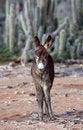 Free Spanish Donkey Stock Photos - 7772683