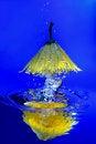 Free Yellow Chrysanthemum In Water Royalty Free Stock Photography - 7779017