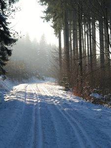Cross-country Skiing Snowtrack Royalty Free Stock Image
