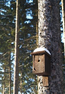 Bird Box On Spruce Stock Image