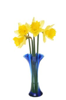 Free Daffodils Royalty Free Stock Photos - 7770778