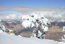 Free Snow Covered Tree Overlooking The Grand Canyon Royalty Free Stock Photos - 7770928