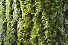 Free Moss On Bark Royalty Free Stock Photos - 7771458