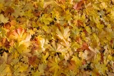 Free Fallen Leaves Royalty Free Stock Image - 7771476