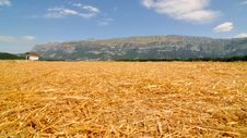 Free Corn Field No.1 Stock Images - 7771924