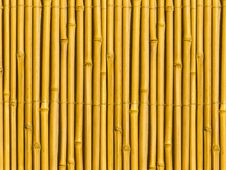 Free Bamboo Tree Trunks Royalty Free Stock Photography - 7772297