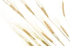 Free Wheat Ears On White Stock Photos - 7772703
