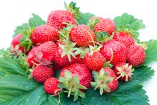 Strawberries On Leaves Royalty Free Stock Image