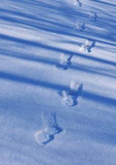 Foot Print On The Snow Royalty Free Stock Photo