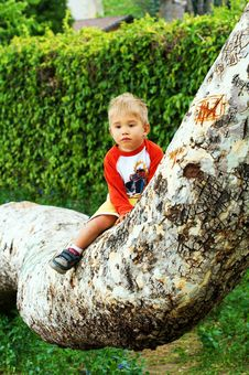 Free Boy Sitting On A Tree Royalty Free Stock Images - 7774129