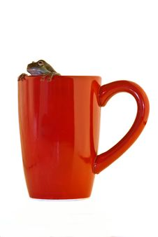 Free Frog Cup Royalty Free Stock Image - 7774276