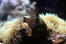 Free Fish Stock Photo - 7775880