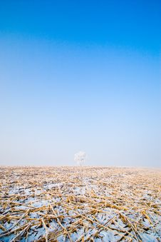 Free Winter Landscape With Frosted Trees Royalty Free Stock Photos - 7776088