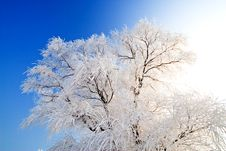 Free Winter Landscape With Frosted Trees Stock Photos - 7776293