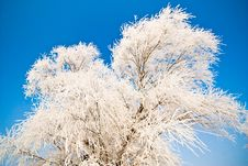 Free Winter Landscape With Frosted Trees Royalty Free Stock Photography - 7776337