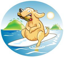Free Dog On A Surfboard Royalty Free Stock Photography - 7776427