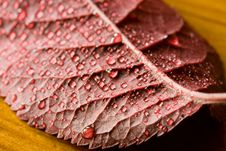 Free Leaf With Raindrops Stock Photo - 7777570