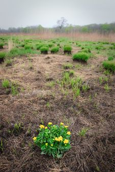 Free Grass Land 5 Royalty Free Stock Photography - 7777807