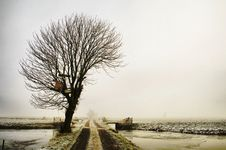 Free Winter Tree In A Foggy Landscape Stock Photo - 7778470