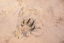 Free Animal Trace On A Sand Royalty Free Stock Images - 7778999