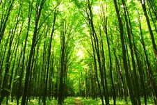 Free Forest Stock Photography - 7779552