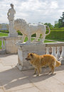 Free Dog Or Lion Royalty Free Stock Images - 7781569