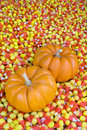 Free Mini Pumpkins In Candy Corn Royalty Free Stock Images - 7782189