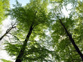 Free Forest Green Stock Photography - 7783042