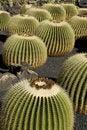 Free Cactus Stock Photos - 7783133
