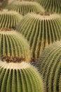 Free Cactus Stock Photography - 7783342