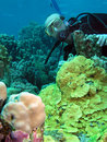 Free Diver Royalty Free Stock Photos - 7789838