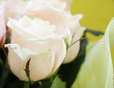 Beautiful Wedding Bunch Of Pale Pink Roses Royalty Free Stock Photo
