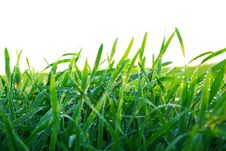 Free Grass Stock Images - 7781194