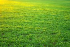 Free Lawn Background Royalty Free Stock Photo - 7781215