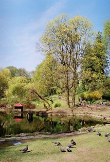 Free Pond Stock Image - 7781491