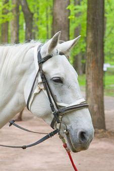 Free White Horse Stock Photography - 7782012