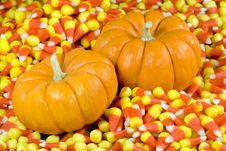 Mini Pumpkins In Candy Corn Royalty Free Stock Image